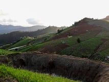 在北泰国的小山的农田植被 图库摄影