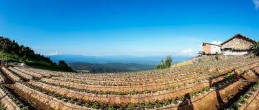 在北泰国的小山的农田植被 免版税库存照片