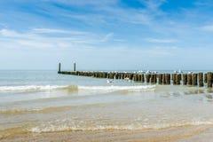 在北海用木材建造在海滩的groynes 图库摄影