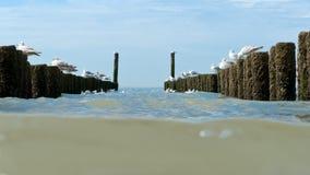 在北海用木材建造在海滩的groynes 库存图片