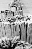 在北海用木材建造在海滩的groynes 免版税库存图片