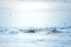 在北海的波浪在丹麦 免版税图库摄影
