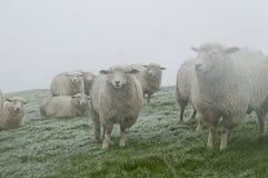 在北海的绵羊在雪风暴支持 胡苏姆,德国 免版税库存图片