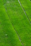 在北碧,泰国的绿色米领域 免版税库存图片