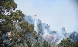 在北美灰熊峰顶的野火在奥克兰 免版税库存图片