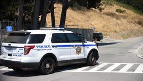 在北美灰熊的警察锐化野火 免版税库存照片