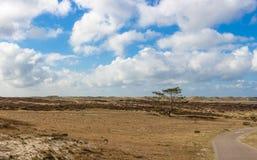 在北荷兰省沙丘的荒地在荷兰 免版税库存照片