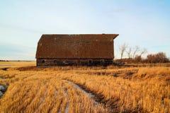 在北达科他生存另一个冬天的一个老谷仓 库存图片