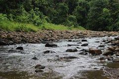 在北部婆罗洲森林中间的一条小河 库存图片