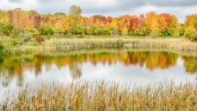 在北部山茱萸池塘,伍德兰希尔斯的秋天反射自然中心, MI 免版税库存照片