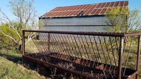 在北部得克萨斯干草谷仓后的牛饲养者 库存照片