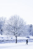 在北部的冬天 免版税库存图片