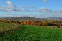 在北部纽约山坡的秋叶  图库摄影