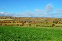 在北部纽约山坡的秋叶  免版税库存图片