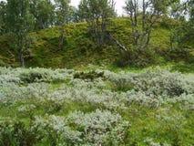 在北部达拉纳省,瑞典山的绿色自然  免版税库存图片
