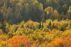 从在北M的奥伯格山和槭树观看的秋天白杨木 免版税库存图片