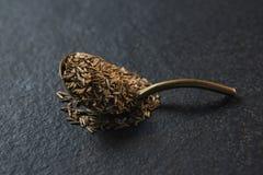 在匙子的小茴香籽在黑背景 库存图片
