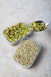 在匙子的绿色白色小豆 库存照片