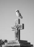 在十字架的猫头鹰 免版税图库摄影