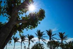 在午间期间在佛罗里达群岛海滩,光束延伸在天空和树干与彩虹斑点 库存照片