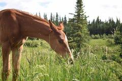 在午饭时间的小马 免版税图库摄影