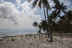 在半月Caye的可可椰子 免版税图库摄影