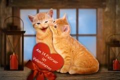 在华伦泰的两只被迷恋的猫 免版税图库摄影
