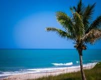 在华美的蓝色海洋和海滩前面的棕榈树 免版税图库摄影