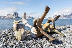 在卑尔根群岛海岸的老鲸鱼骨头,北极 库存图片