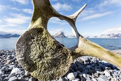 在卑尔根群岛海岸的老鲸鱼骨头  免版税库存照片