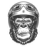 在单色样式的严肃的大猩猩 免版税库存照片