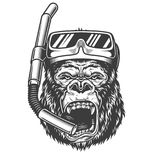 在单色样式的恼怒的大猩猩 库存照片