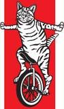 在单轮脚踏车的镶边猫 免版税图库摄影