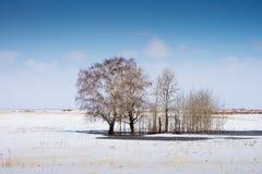 在南乌拉尔干草原的春天  免版税图库摄影