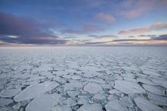 在南冰洋的薄煎饼冰 库存照片