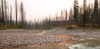 在南叉扁平头的河的合流的日落和在草甸小河的失去的杰克小河在鲍伯马歇尔原野-蒙大拿狼吞虎咽 库存图片