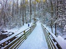 在南山国家公园的冬天场面在北卡罗来纳 免版税库存图片