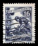 在南斯拉夫打印的邮票显示妇女对收获向日葵 库存图片