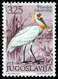 在南斯拉夫打印的邮票显示欧亚篦鹭 库存图片