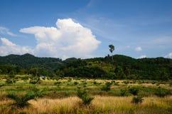 在南泰国的小山的谷物庄稼 免版税库存图片