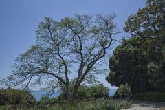 在南海岸的美丽的农村山路与在前景的一棵树 图库摄影