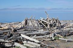 在南海滩的漂流木头风雨棚 图库摄影