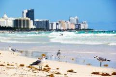 在南海滩的海鸥 免版税库存图片