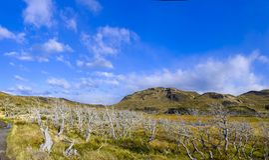 在南美大草原的干燥死的树 免版税库存照片