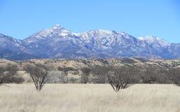 在南部的亚利桑那-圣丽塔山的冬天风景 图库摄影