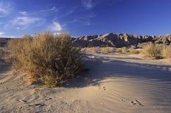 在南部的圣附近的加利福尼亚沙漠地亚哥 库存图片