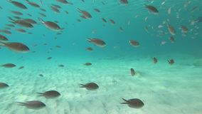 在博内尔岛的珊瑚和鱼 股票视频
