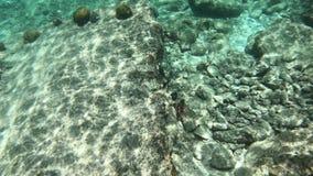 在博内尔岛的珊瑚和鱼 股票录像