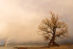 在博登湖岸的老被隔绝的杨柳  库存照片