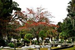 在博纳旺蒂尔公墓的红色树 免版税库存图片